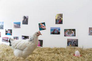 chicken_museum_mailaender_6
